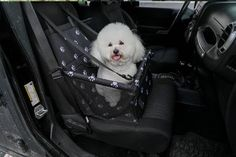 Dog Seater photo review